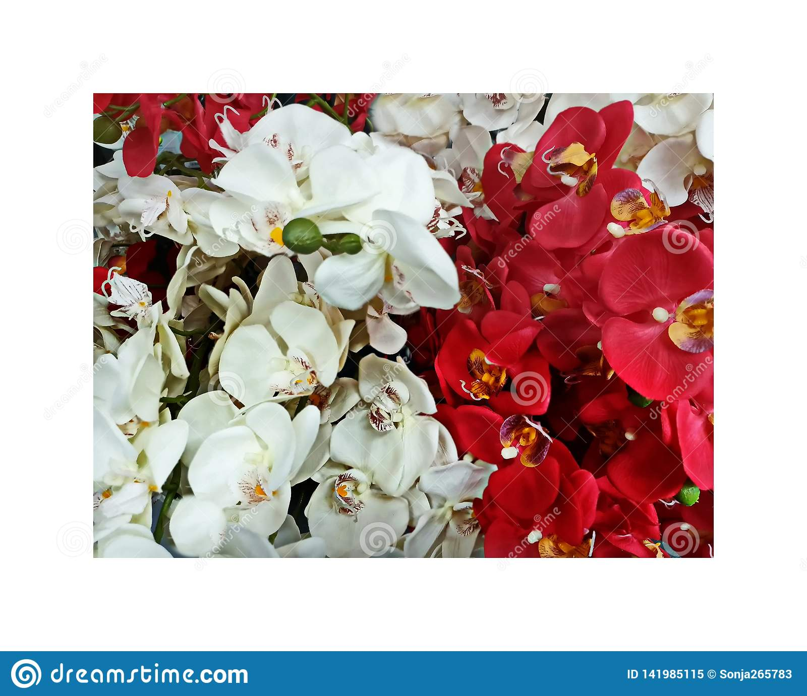 Orchids Red and White Flowers Background decoration design abstract art, Flowers decor for home ,greeting card ,women`s day