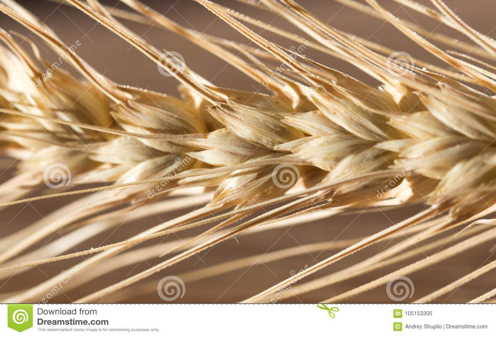 Orecchie di frumento Macro