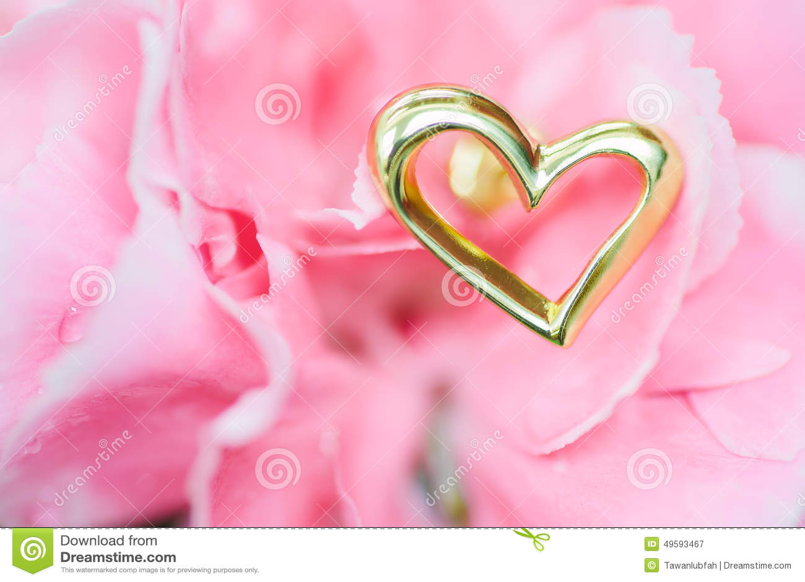 Orecchino del cuore sul fiore rosa