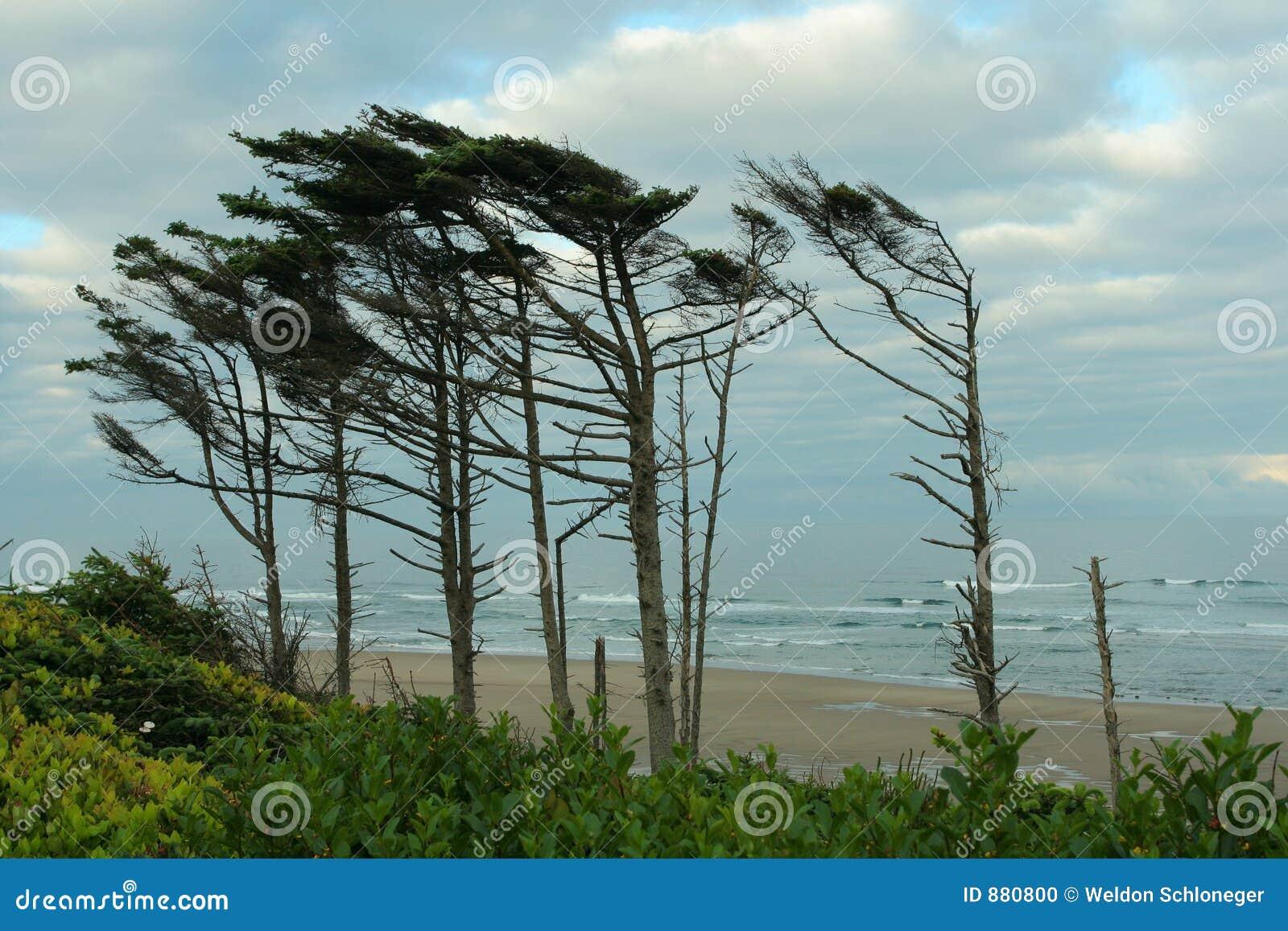 Oregon bandery brzegowi drzewa