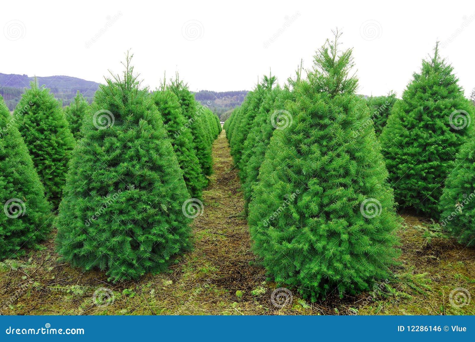 Green Garden Christmas Tree Farm