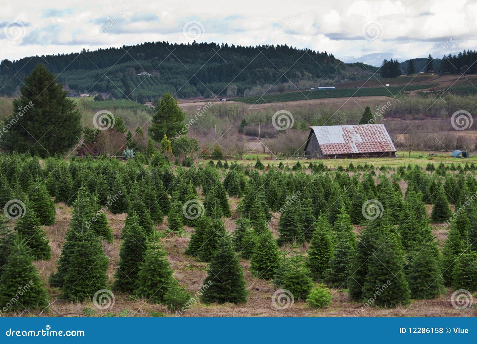 Pine Valley Christmas Tree Farm