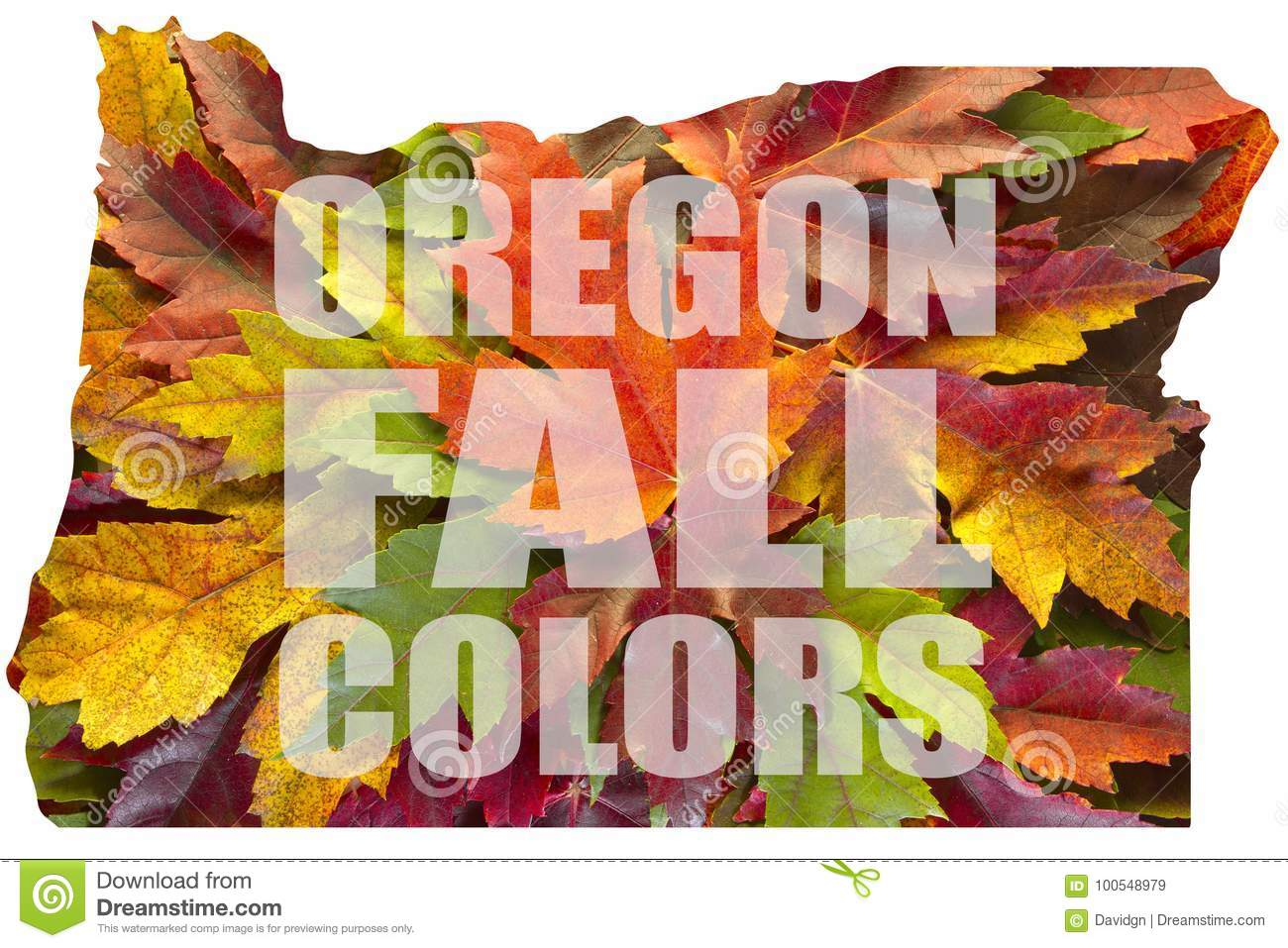 Oregon Maple Leaves Mixed Fall Colors Text USA