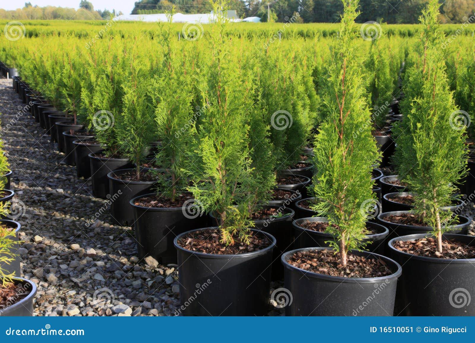 Oregon Nurseries And Seedling Plants Stock Image Image
