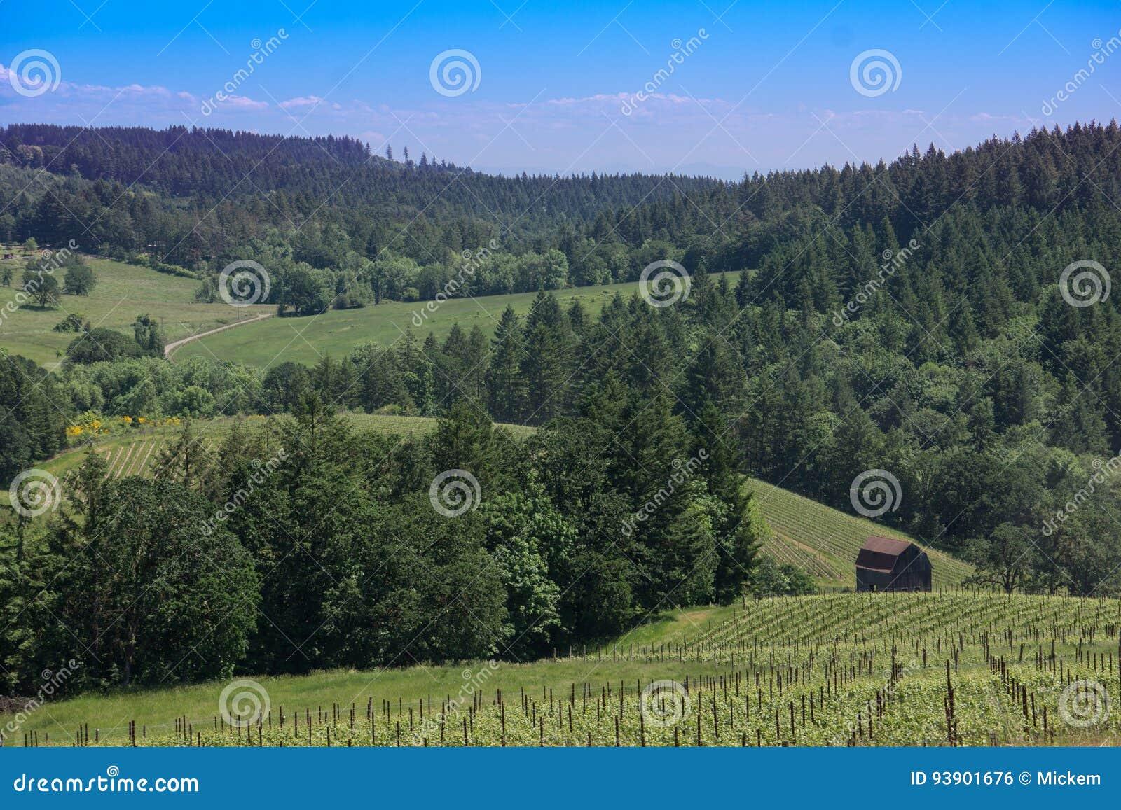 Oregon Wine Country Landscape