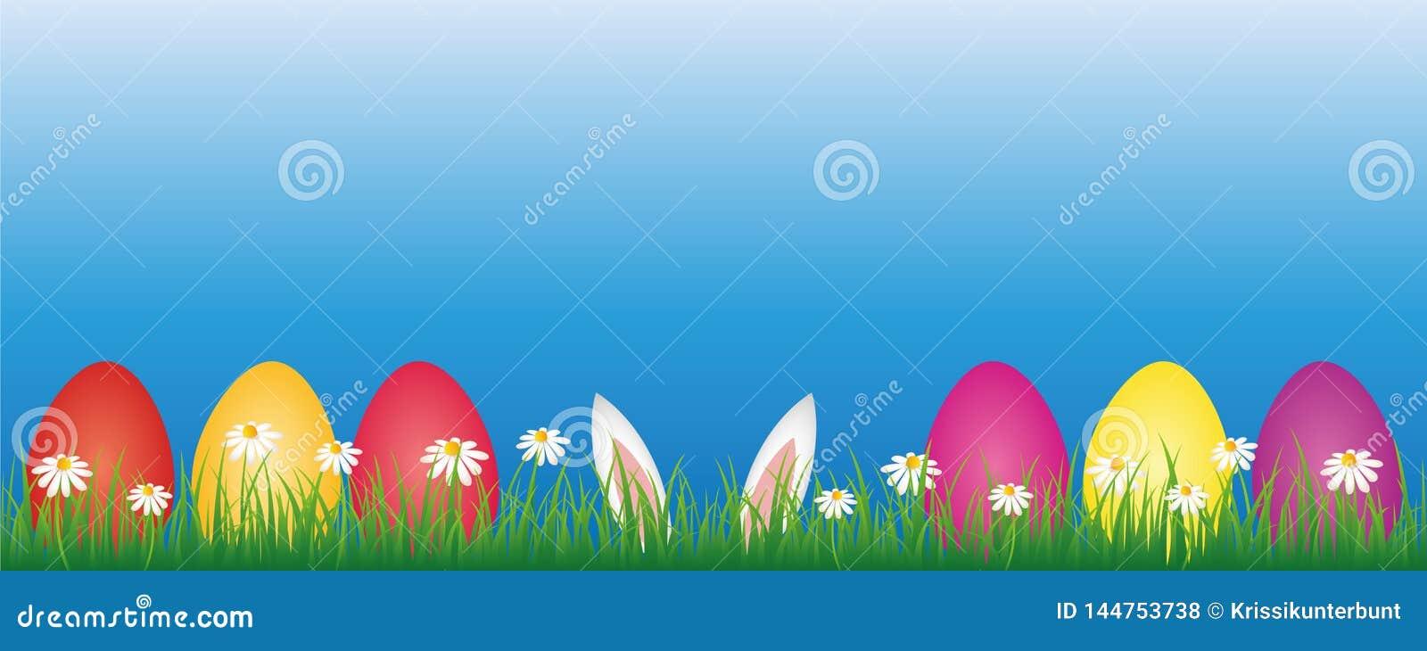 Oreilles de lapin et oeufs de pâques colorés dans le pré vert avec la bannière de fleurs de marguerite blanche avec l espace