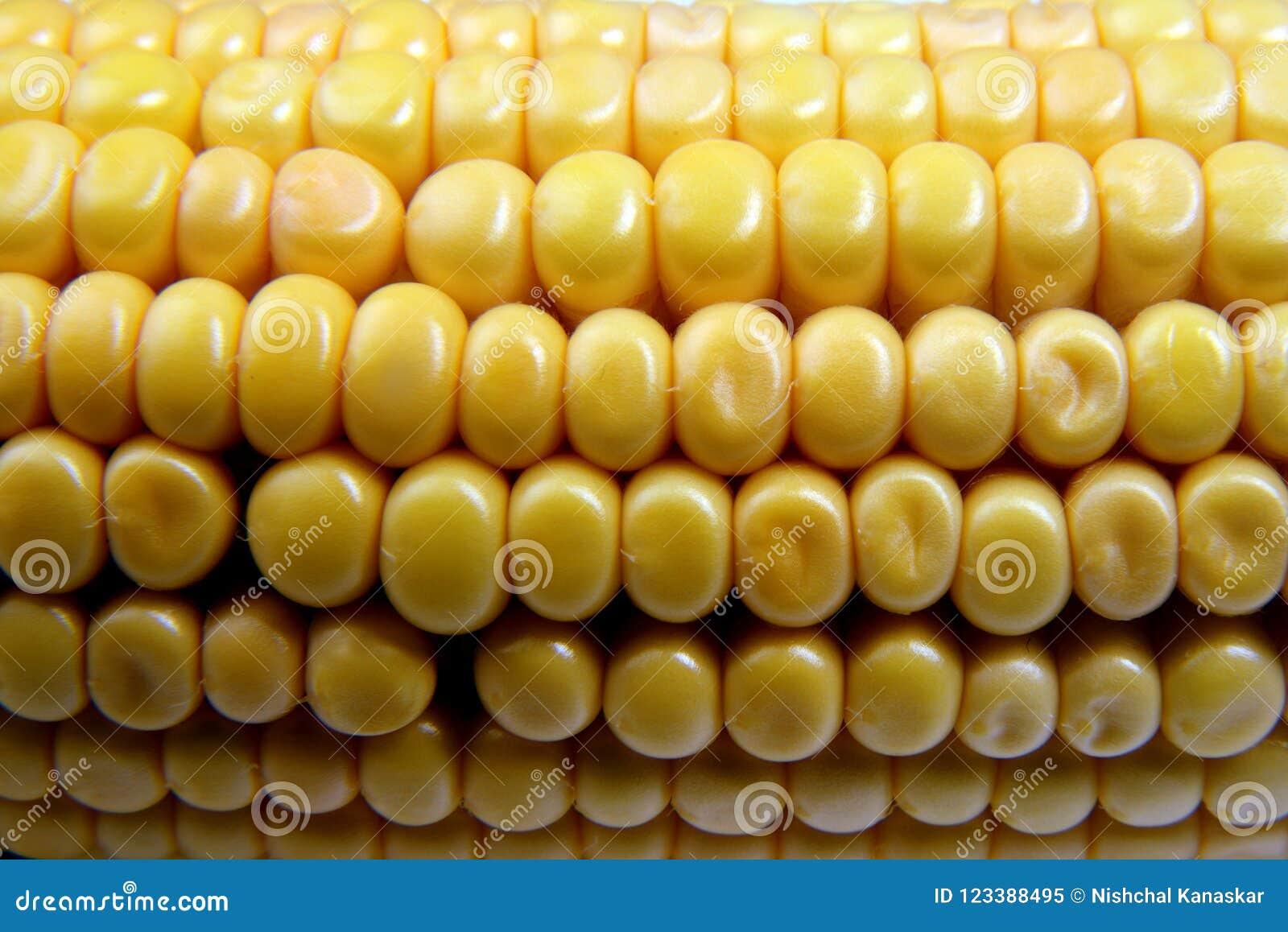 Orelha de milho, close up com espaço para a cópia