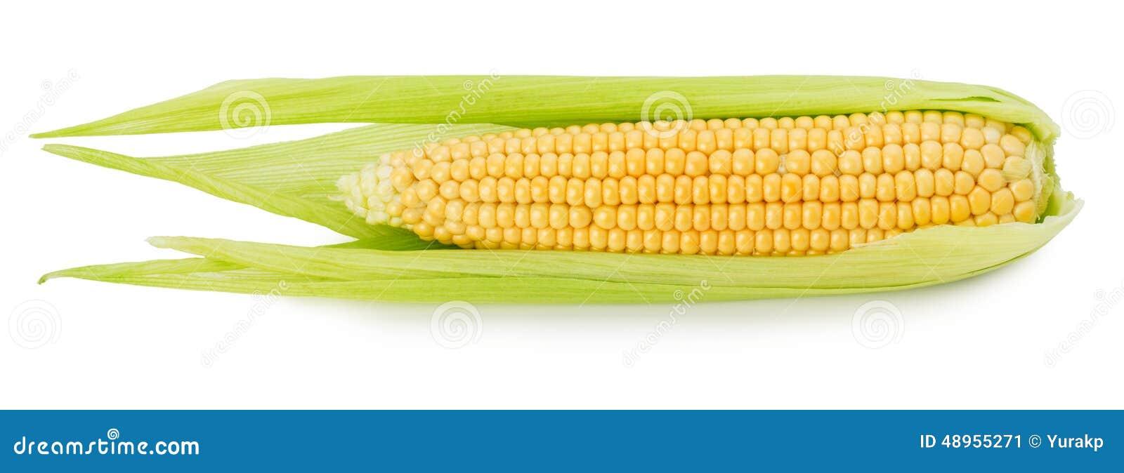 Orelha de milho fresca isolada no fundo branco