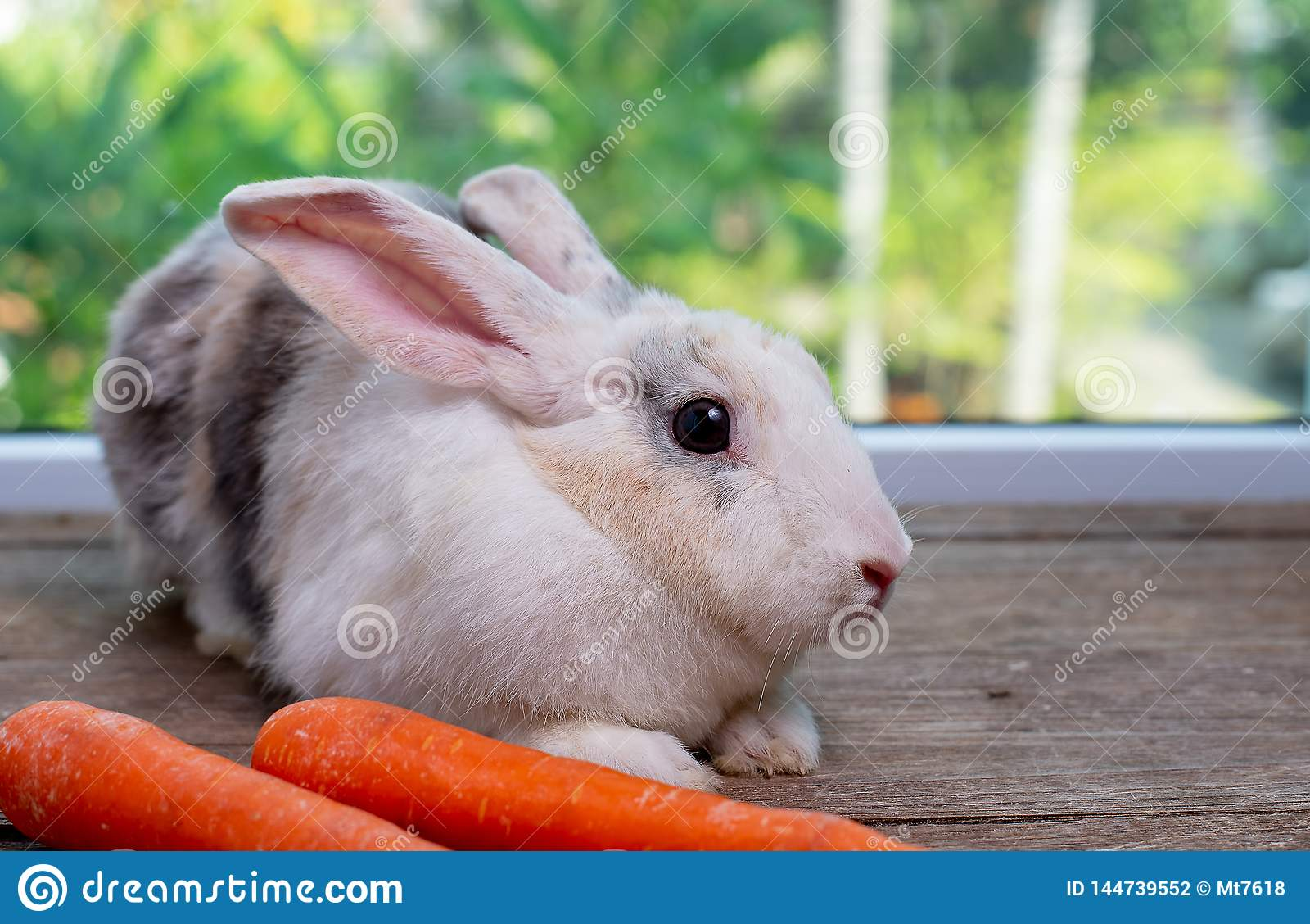 Orelha longa e estada marrom do coelho de coelho das listras na frente da cenoura na tabela de madeira com fundo verde