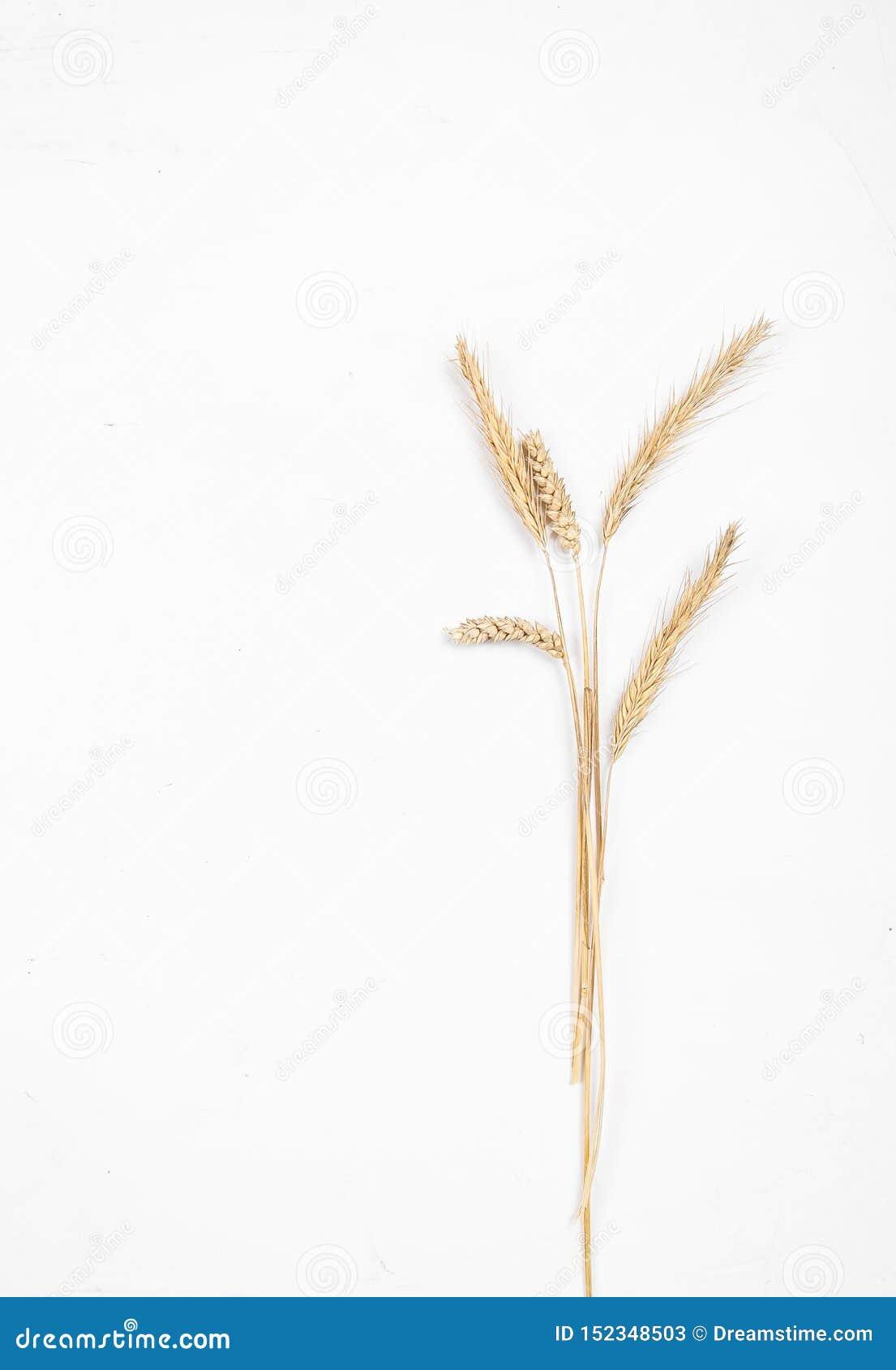Orelhas do cereal em um fundo branco Orelhas do trigo e do centeio Vista de acima