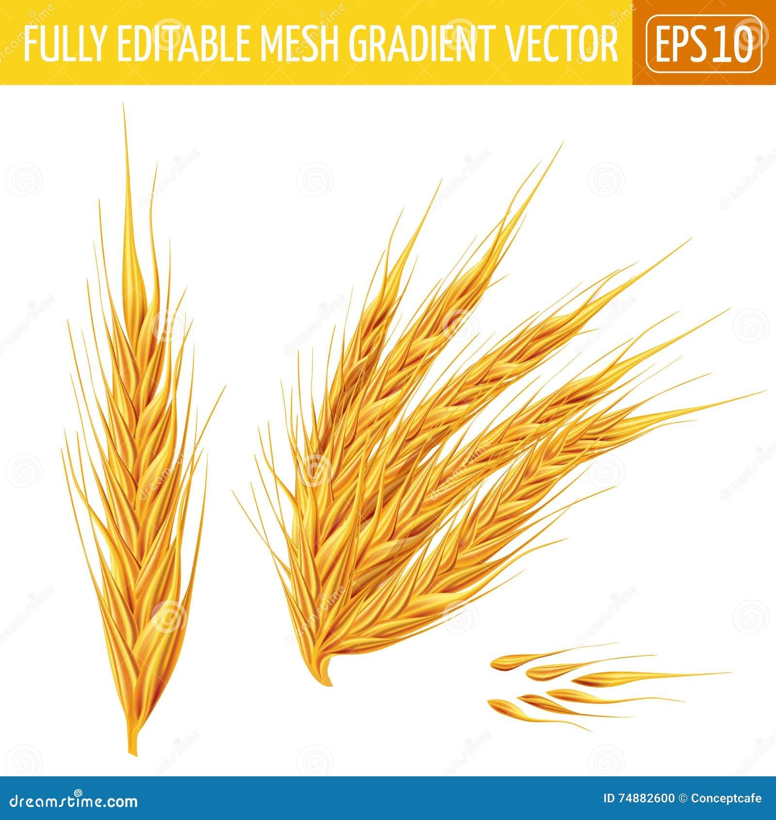 Orelhas do trigo no fundo branco Ilustração do vetor