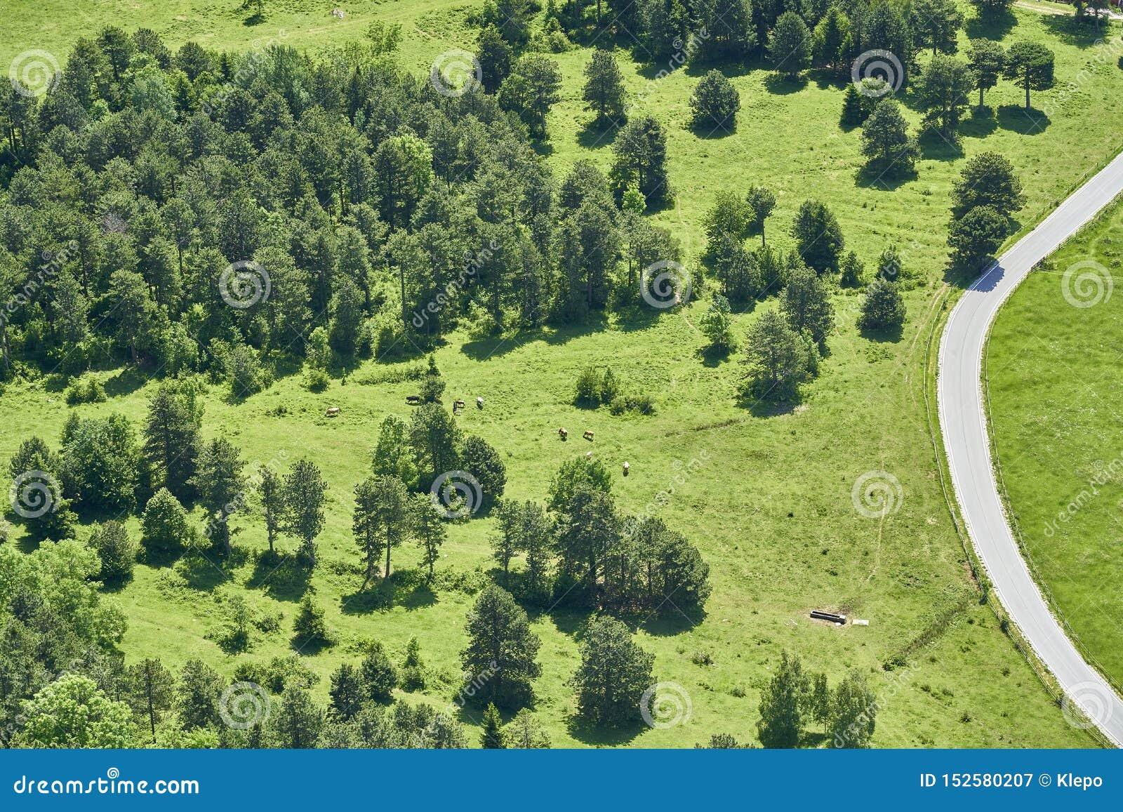 Orest, prado uma estrada e algumas vacas, varinha de Hohe, Áustria