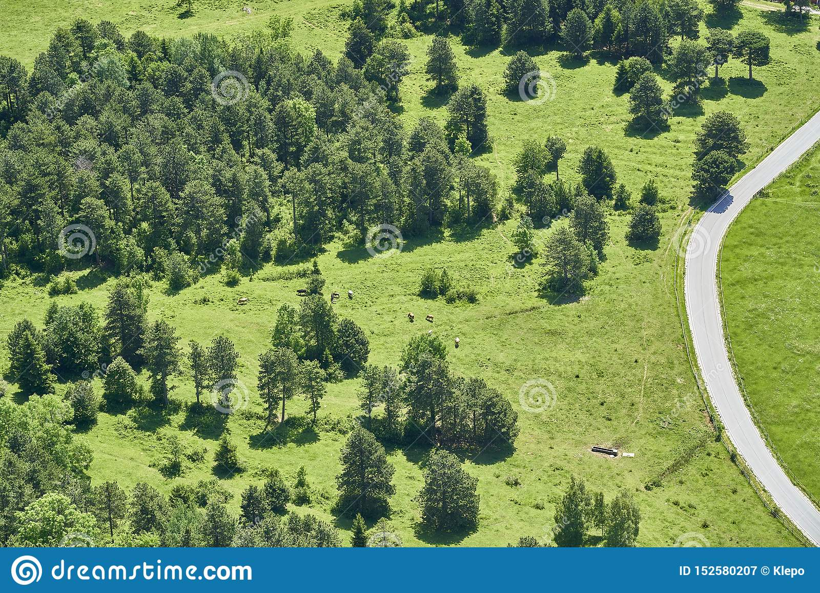 Orest, Wiese eine Straße und einige Kühe, Hohe-Stab, Österreich