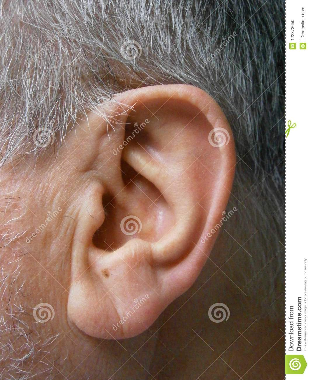 Healthy Side View Of The Ear Stock Photo - Image of human, design ...
