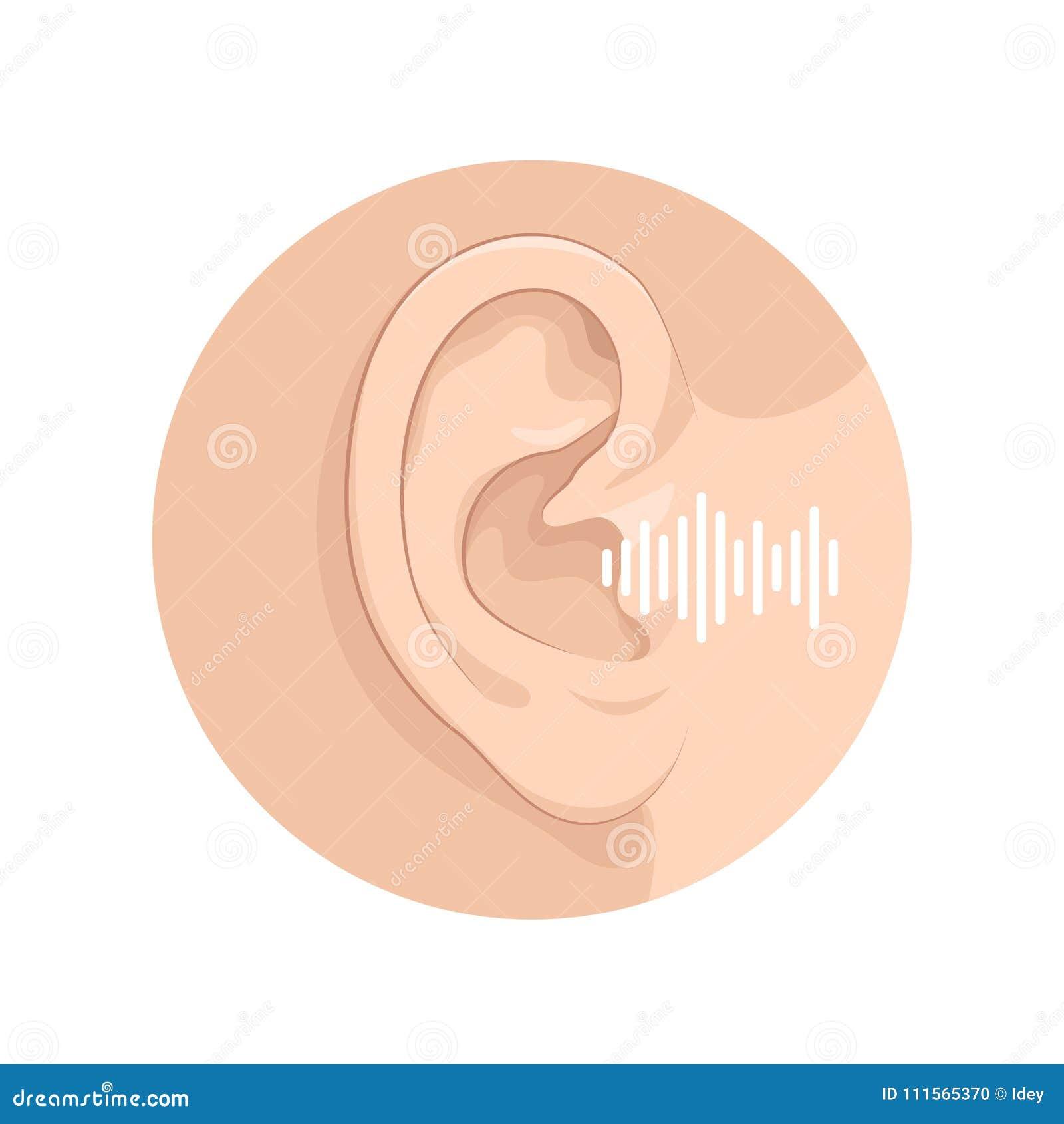 Organ Of Senses Hearing Of Man Anatomy Of Human Organs Stock