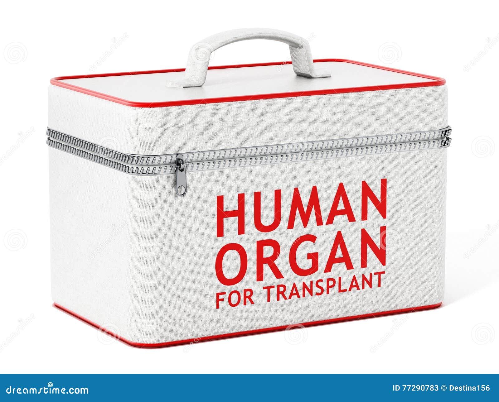 Organe Humain Pour La Boîte De Greffe Illustration 3D Illustration ...
