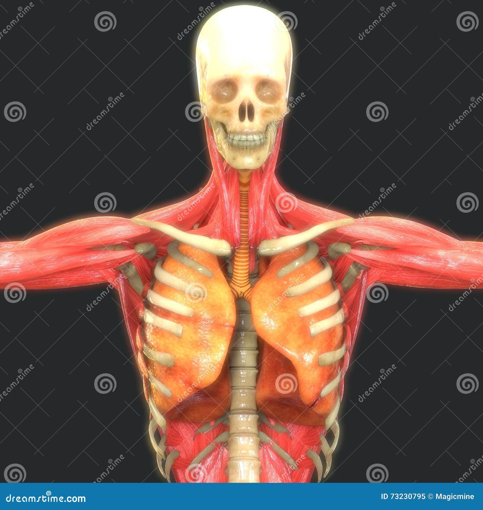 dissertation inviolabilit corps humain Atteinte au corps humain dissertation atteinte au corps humain et consentement de l'intéressé le corps et la vie sont 2 composants l inviolabilit du domicile.