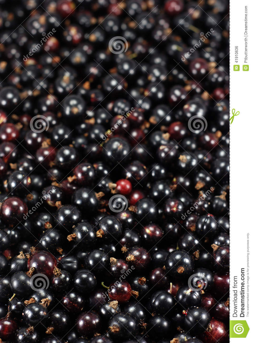 Black Currants blackcurrants