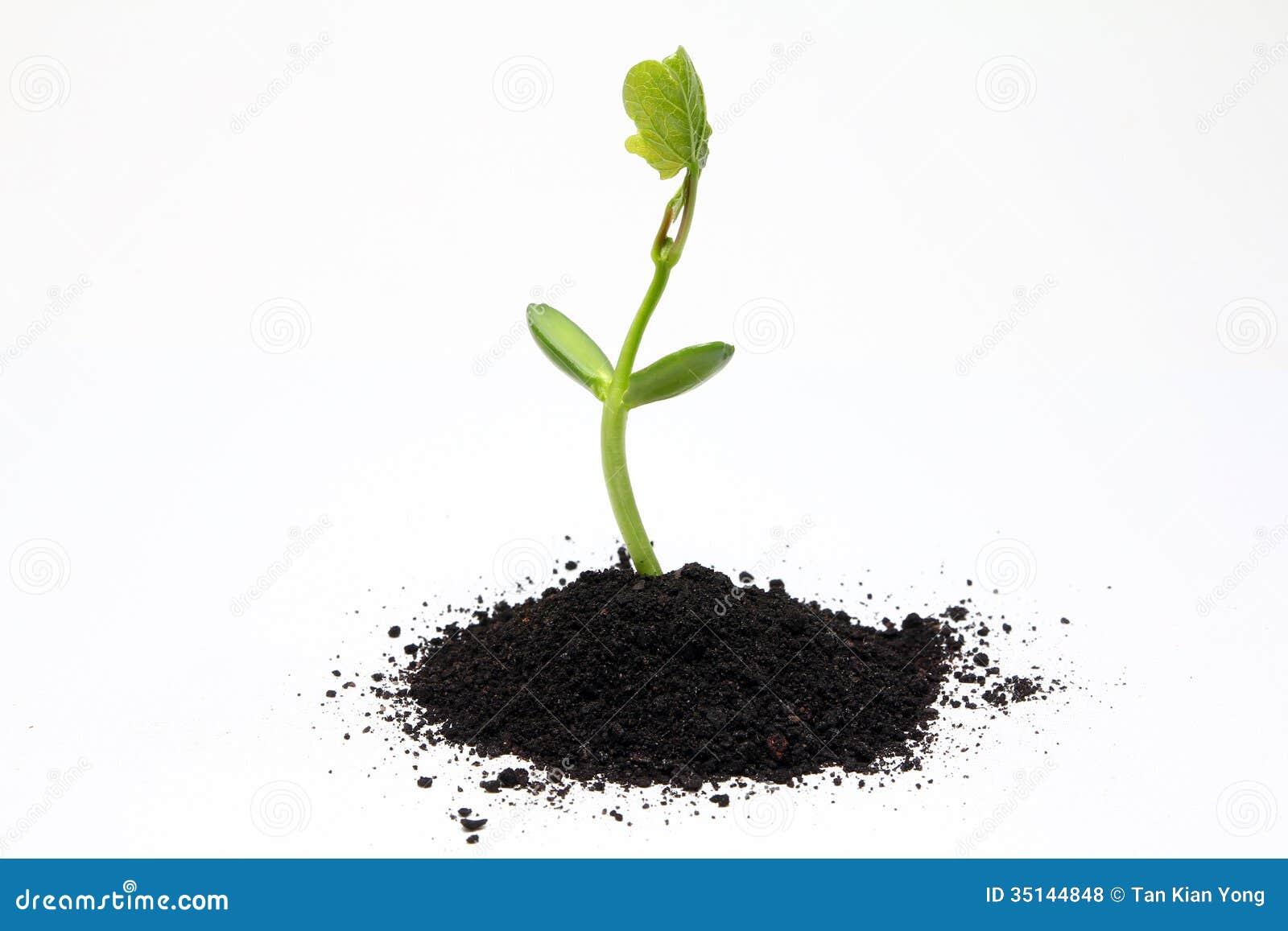 Fertilizers in organic farming