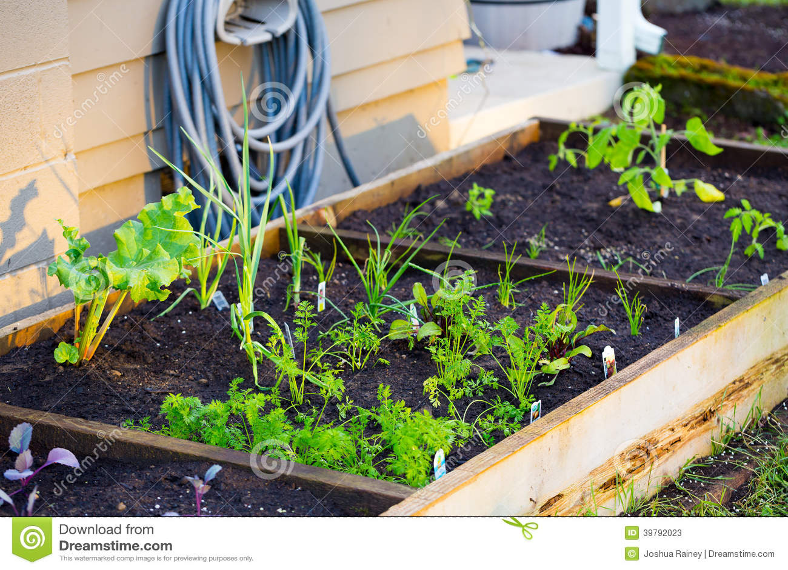 Organic gardening stock photo image 39792023 - Nature s care organic garden soil ...