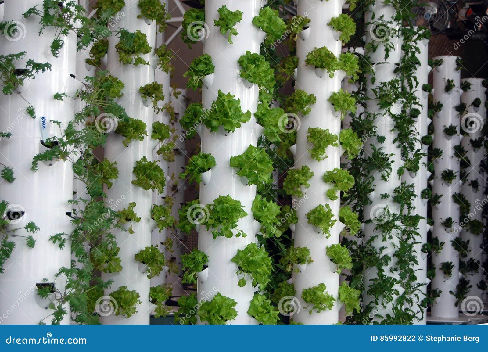 Organic Hydroponic Herbs