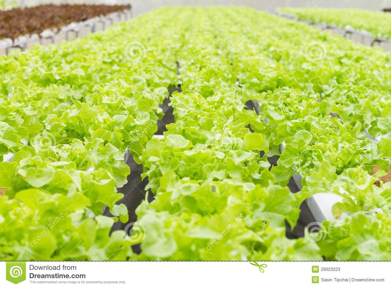 Vegetable farm business plan - How To Start Organic Farming In India