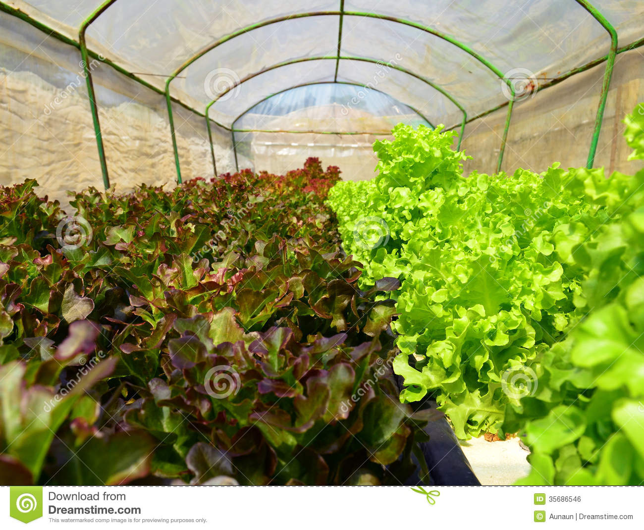 Organic Hydroponic Vegetable Garden Royalty Free Stock Image