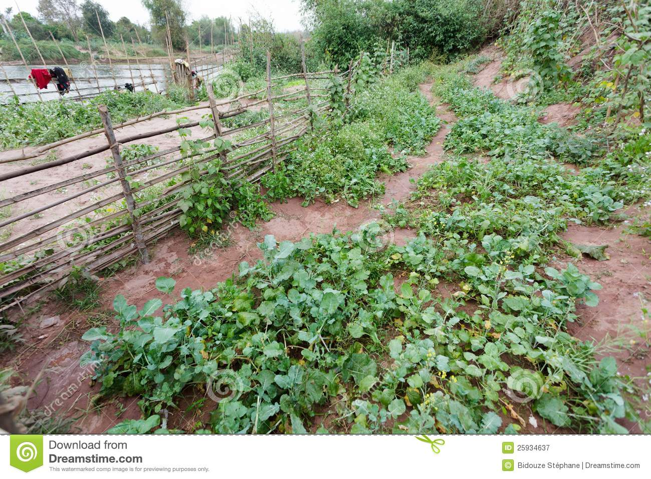 Organic Kitchen Garden Organic Kitchen Garden Royalty Free Stock Photography Image