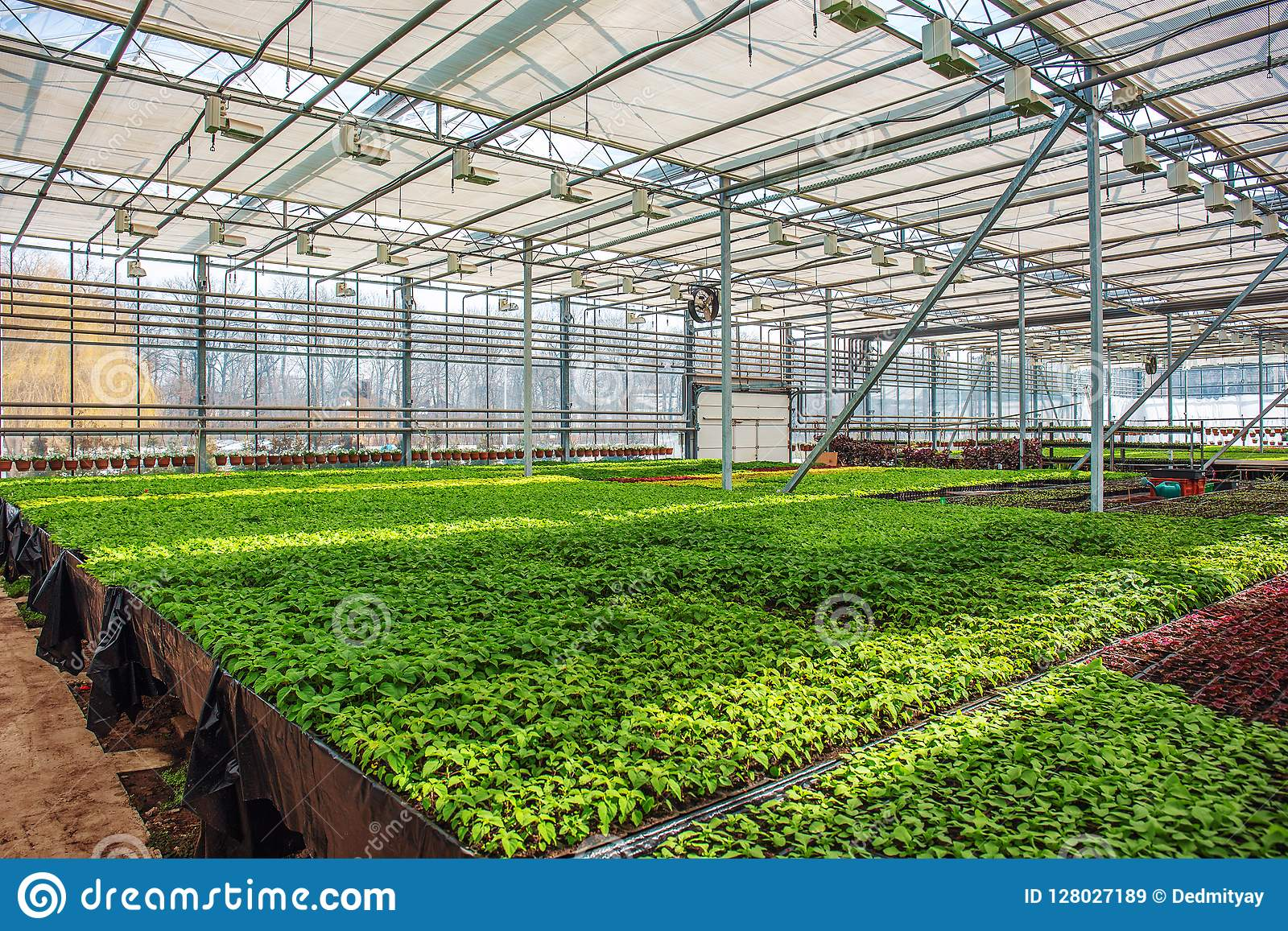 Organic Ornamental Plants And Flowers In Modern Hydroponic Greenhouse Or Hothouse With Climate Control System Stock Image