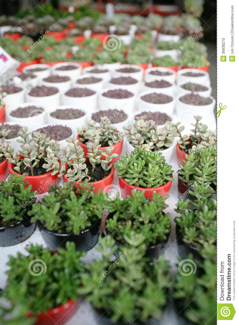 Organic pot gardening stock photo image 36836270 for Dream plants for the natural garden