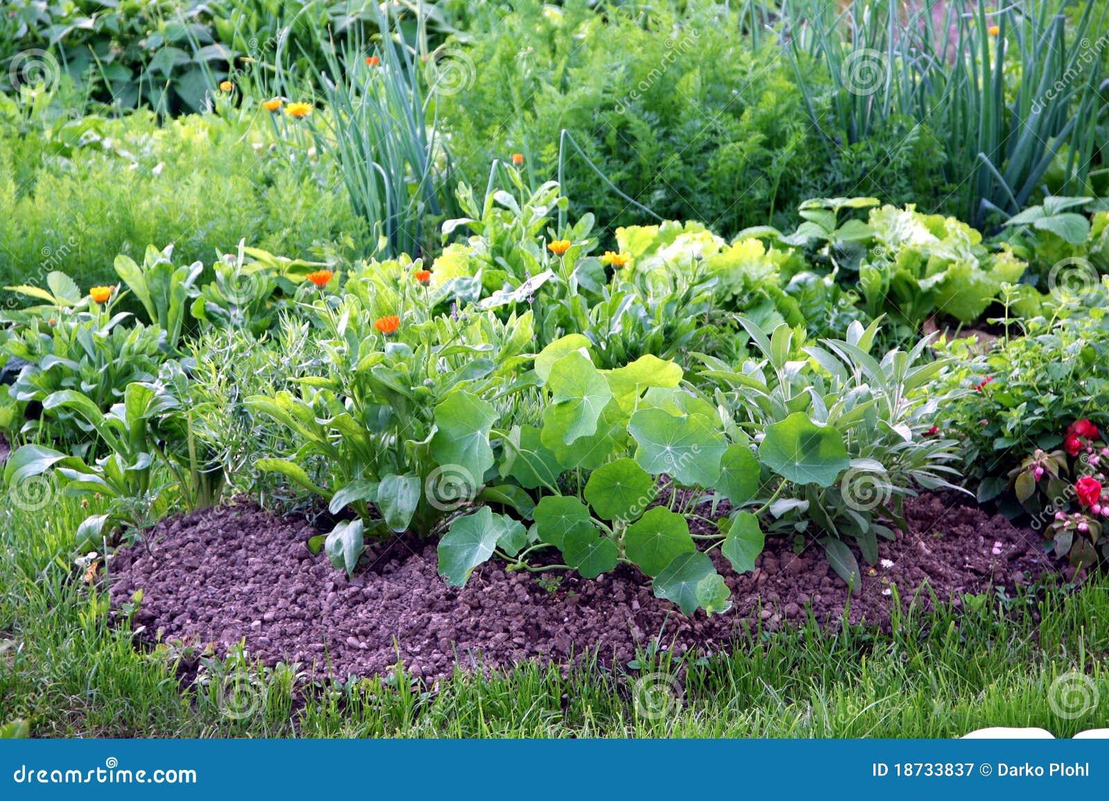 Organic Vegetable Garden Bed Royalty Free Stock