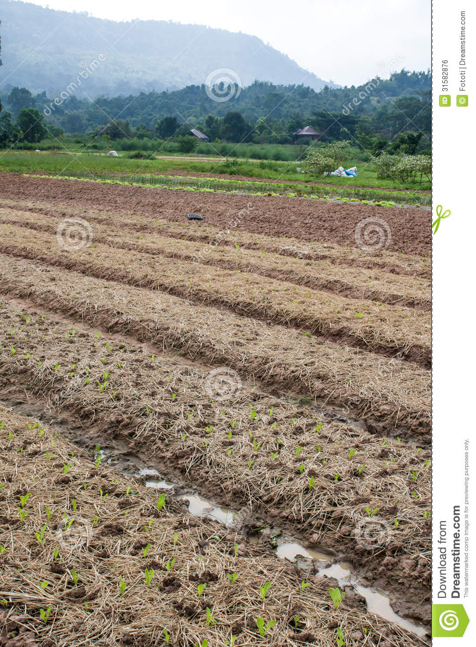 vegetable and mountain states potato View our range of vegetable plants  so all you need to do is prepare your vegetable  for blight-free tomato growing this season look no further than mountain.
