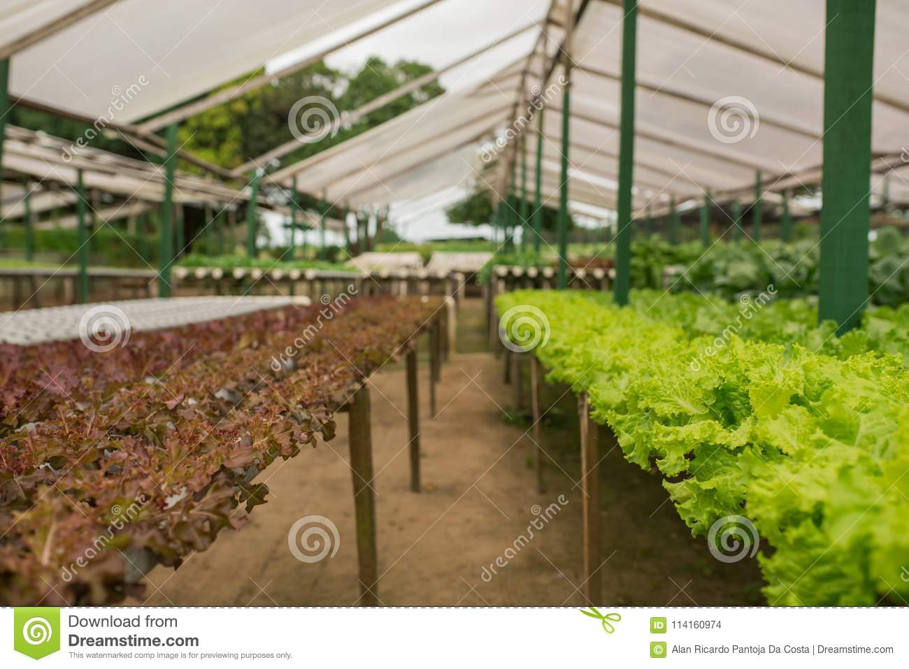 Organic Vegetable Gardening In The Greenhouse Stock Photo - Image of ...
