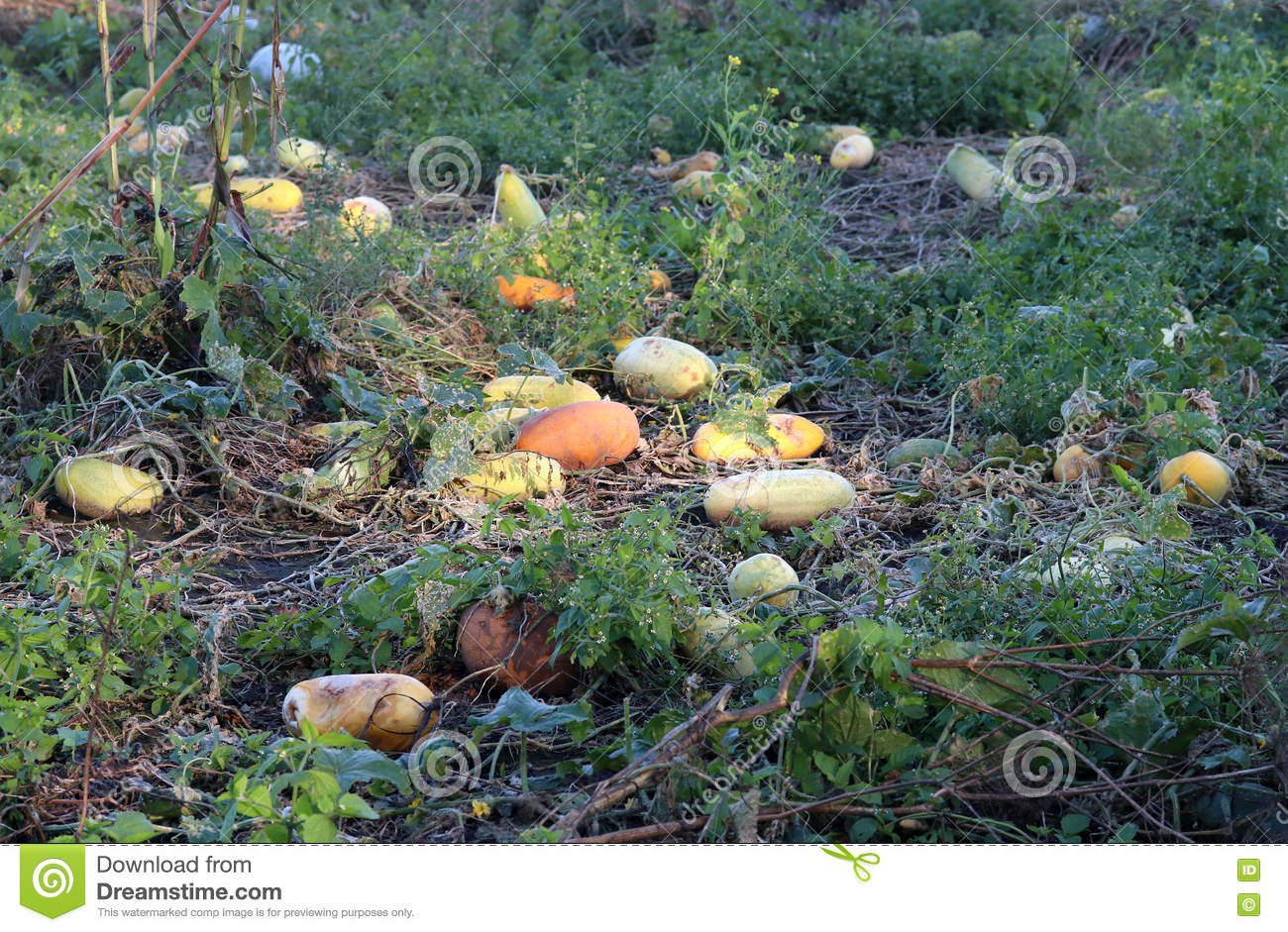 Organic vegetable products stock image  Image of autumn