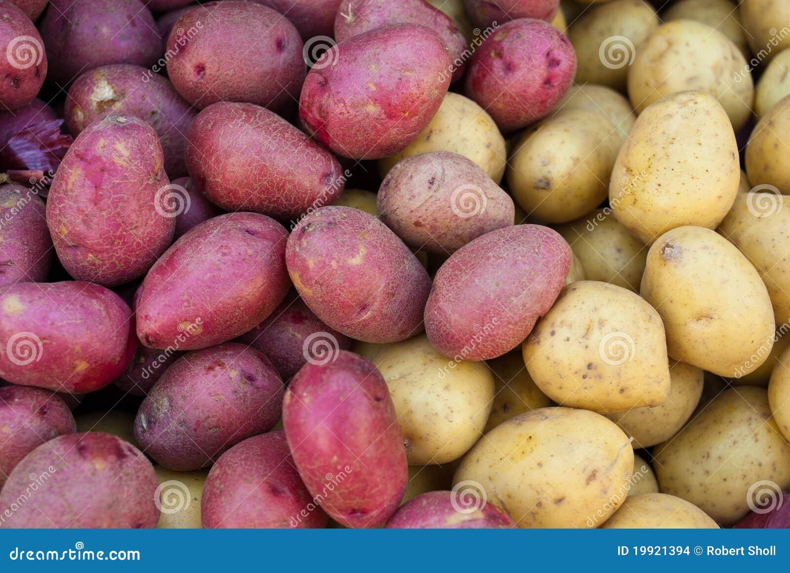 Organicznie grul czerwieni kolor żółty