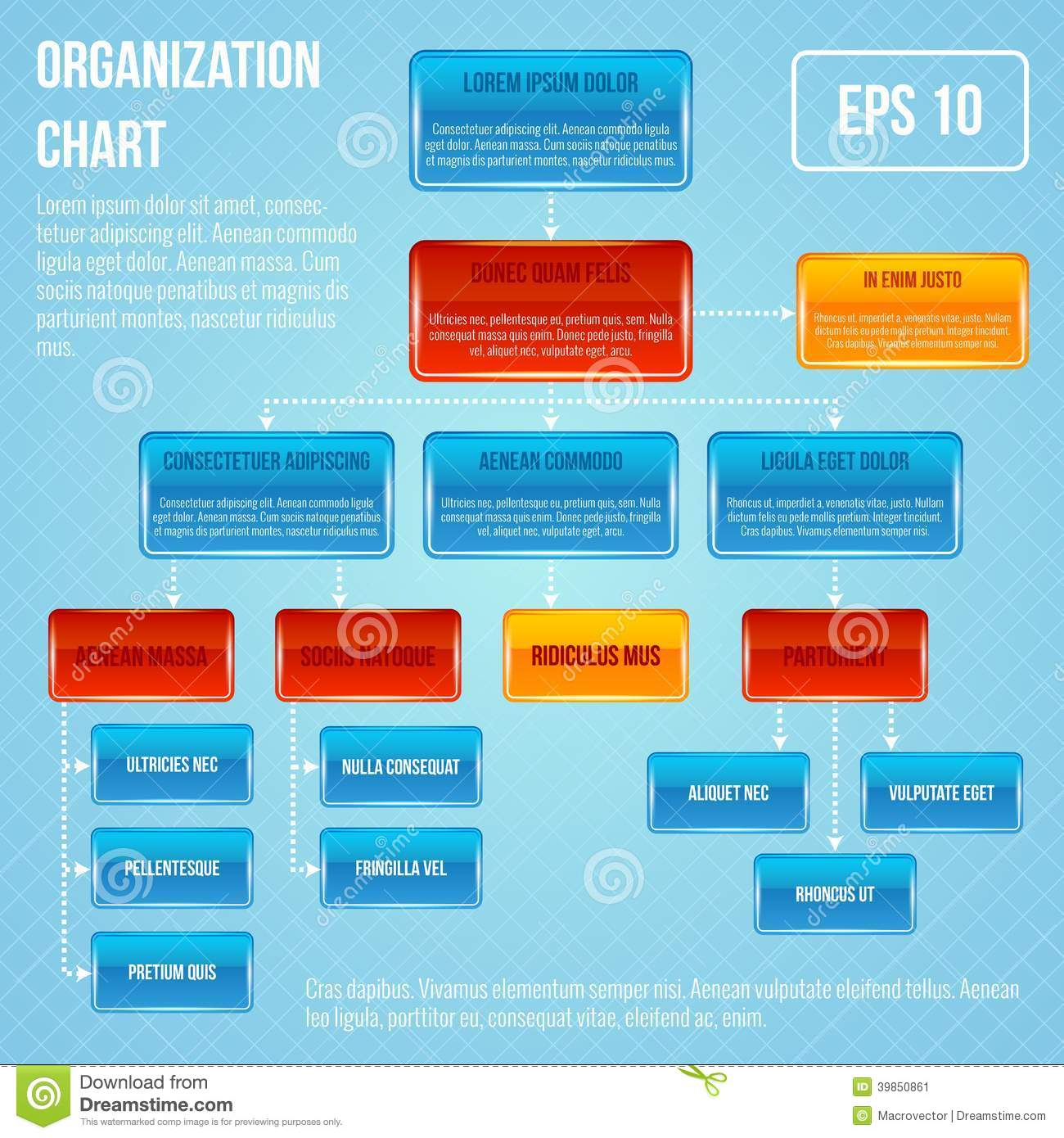 Organisational Chart Infographic Stock Vector Image