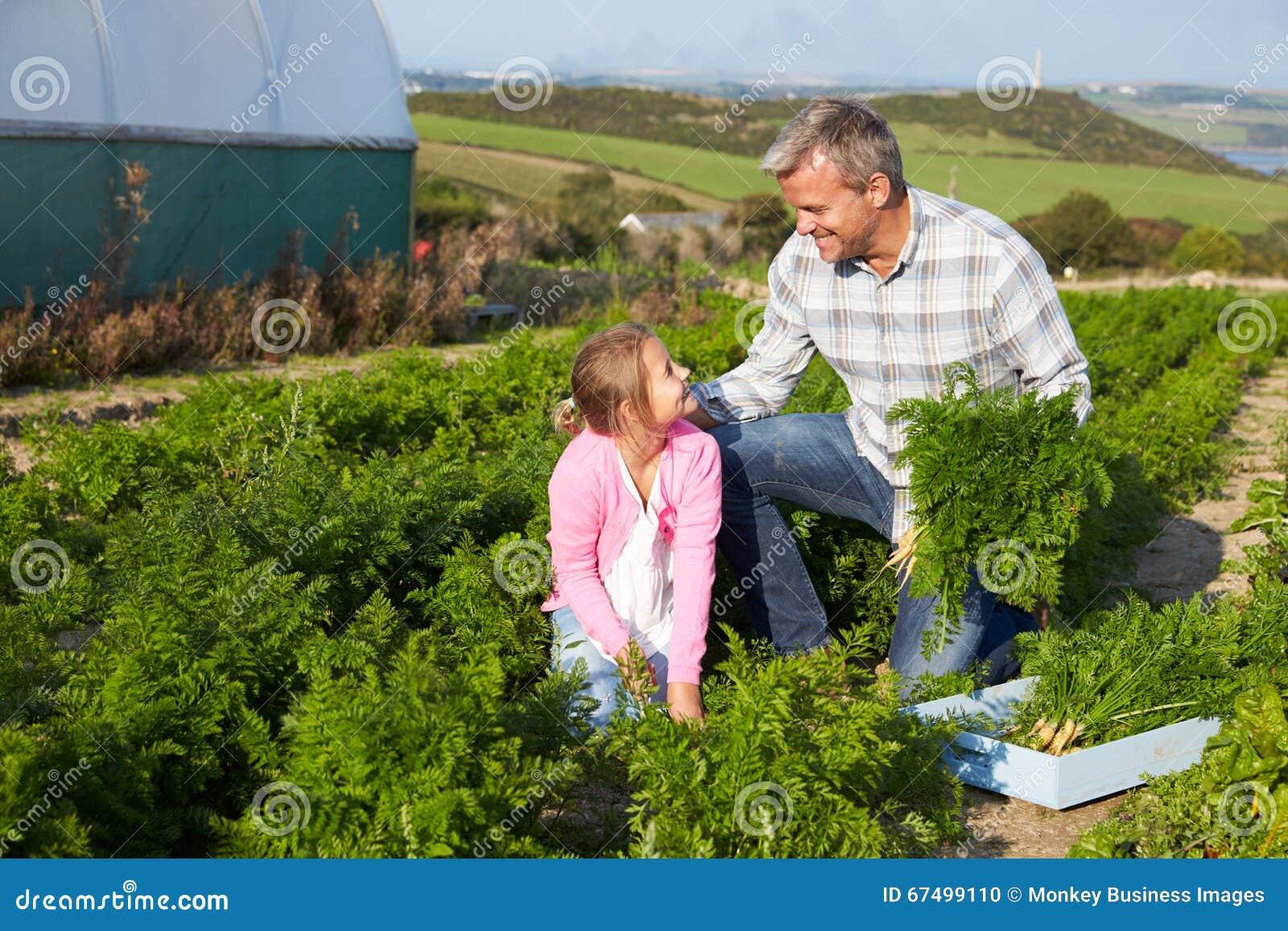 Organisch de Wortelgewas van landbouwerswith daughter harvesting op Landbouwbedrijf