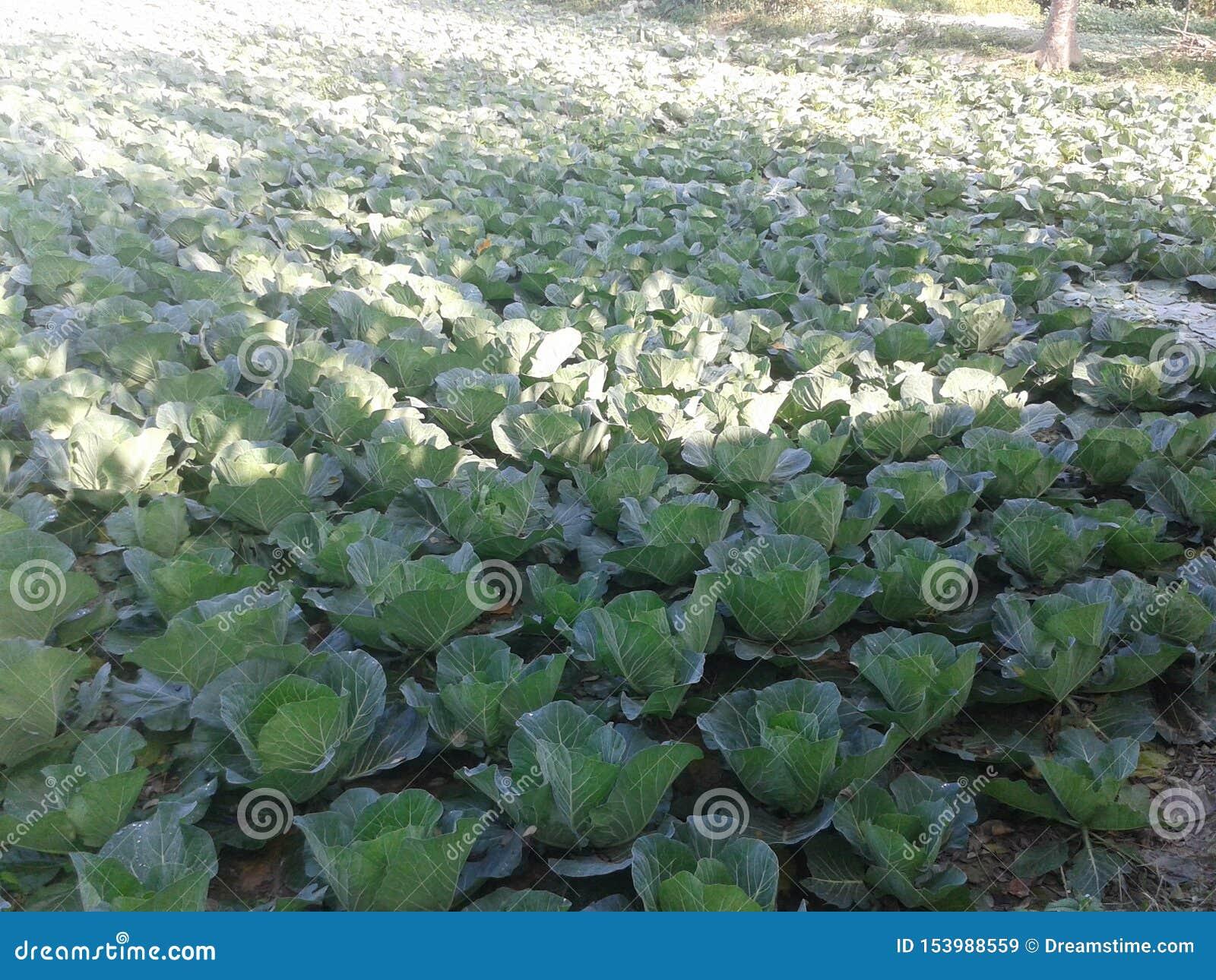 Organisch koollandbouwbedrijf