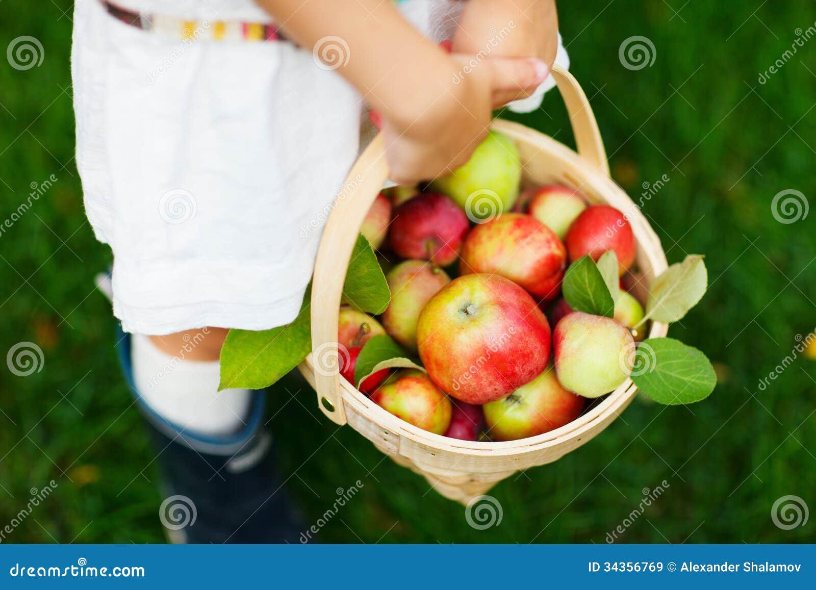 Organische Äpfel in einem Korb