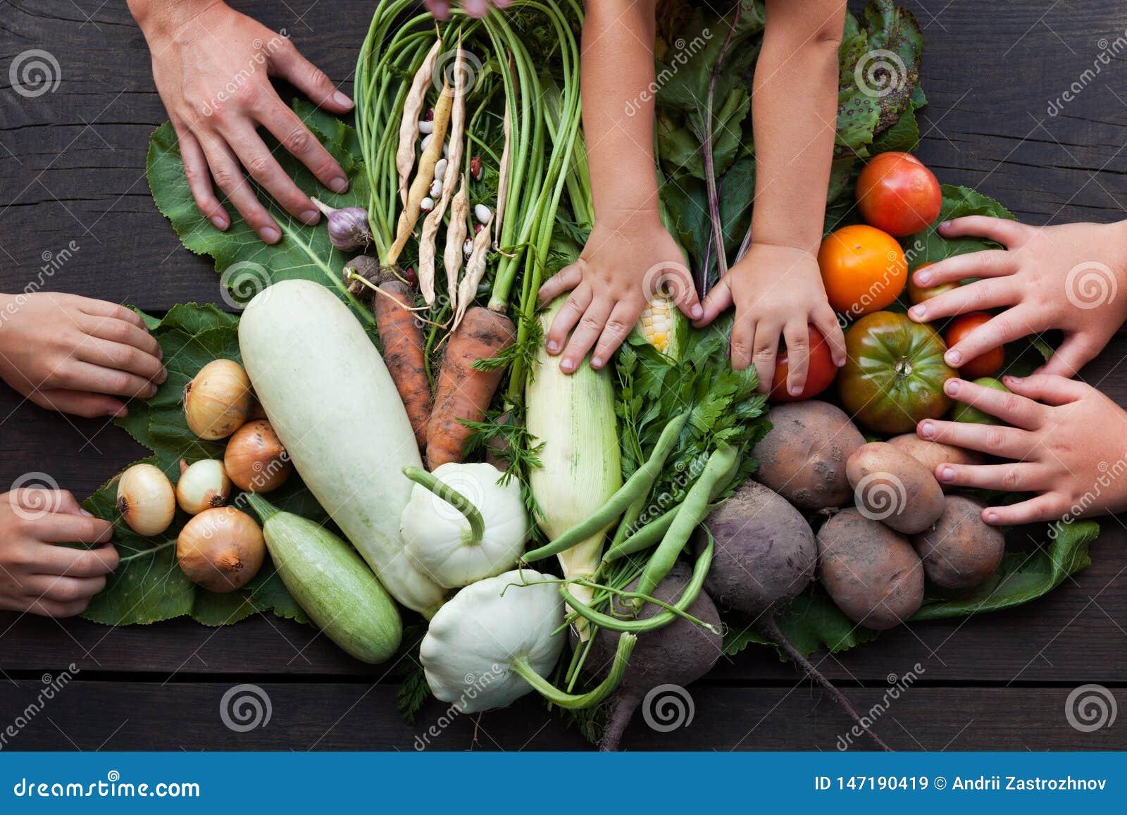 Organische groente, het voedsel van het de Aardgebied van de landbouwersoogst
