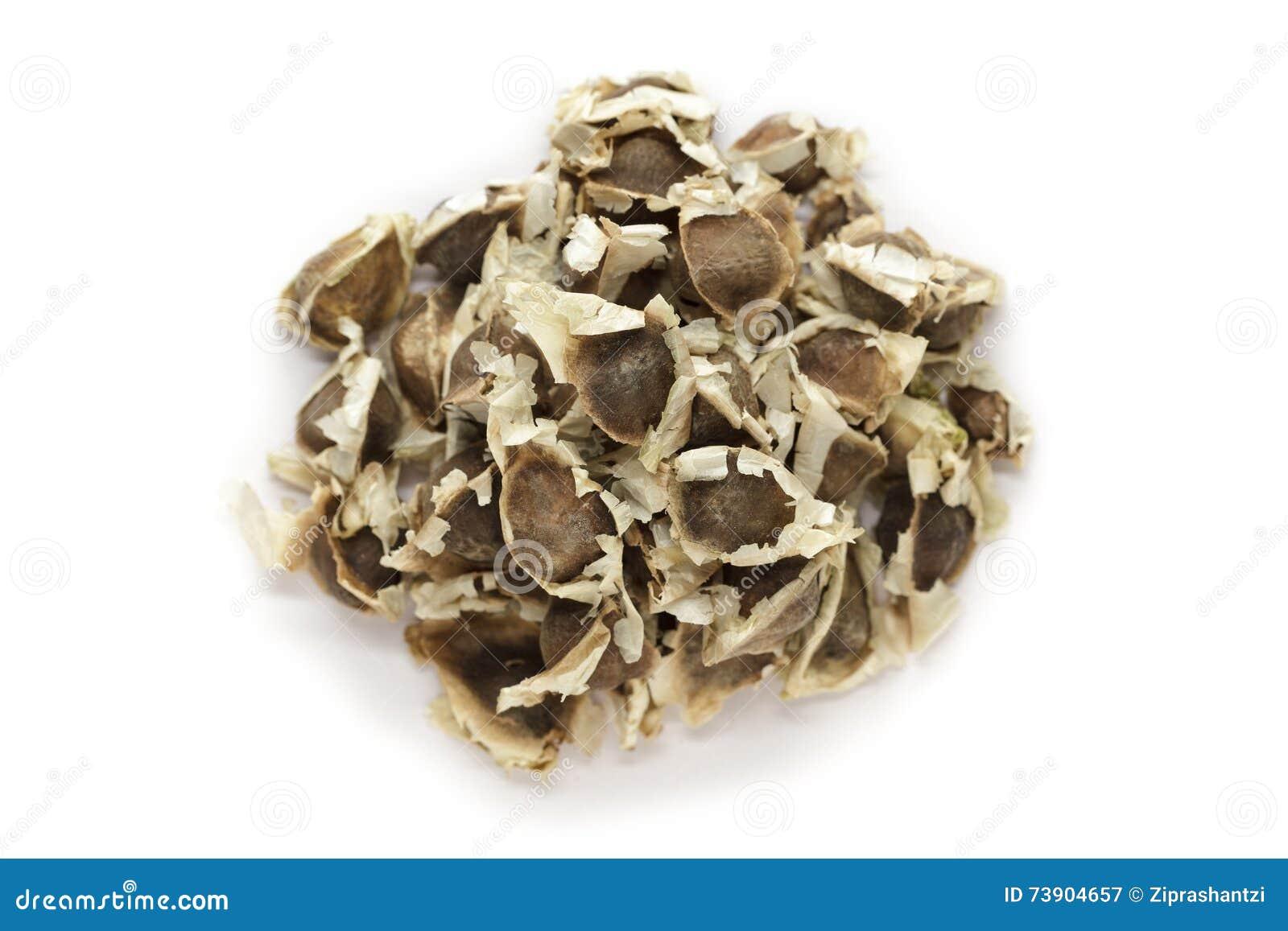 Organische Moringa (oleifera Moringa) zaden