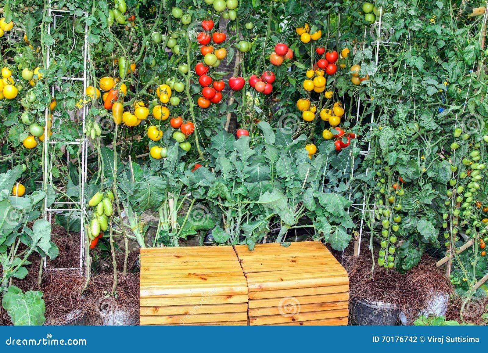 Organisk grönsak i dekorerad trädgård med träbänken