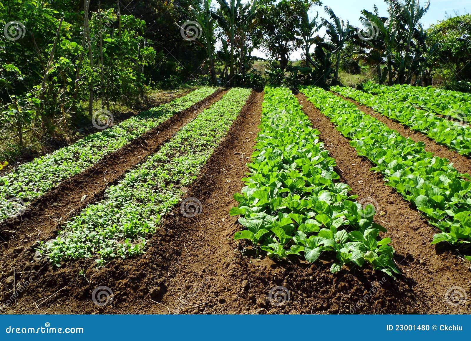 Organisk lantgård
