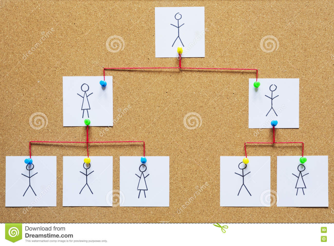 Organization chart on a cork bulletin board stock photo for Bulletin board organization