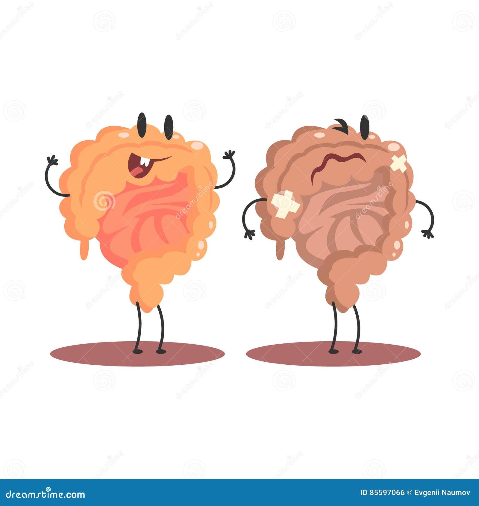 Organo interno umano dell 39 intestino crasso sano contro le for Organo interno codycross