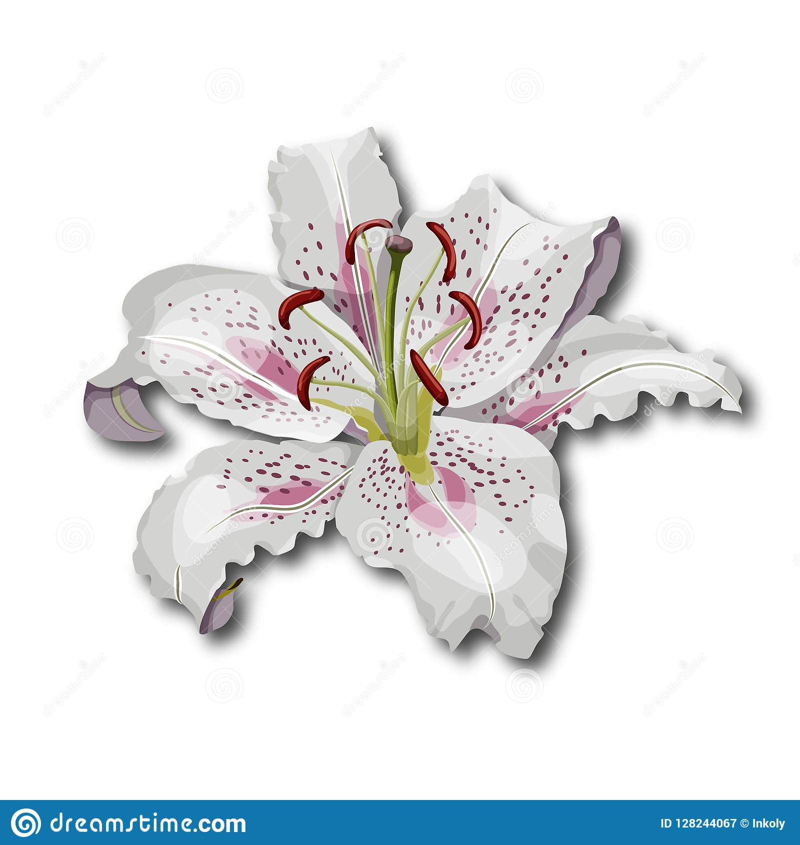6a425b27c Oriental Lily Flower Isolated On White Background. Stock Vector ...