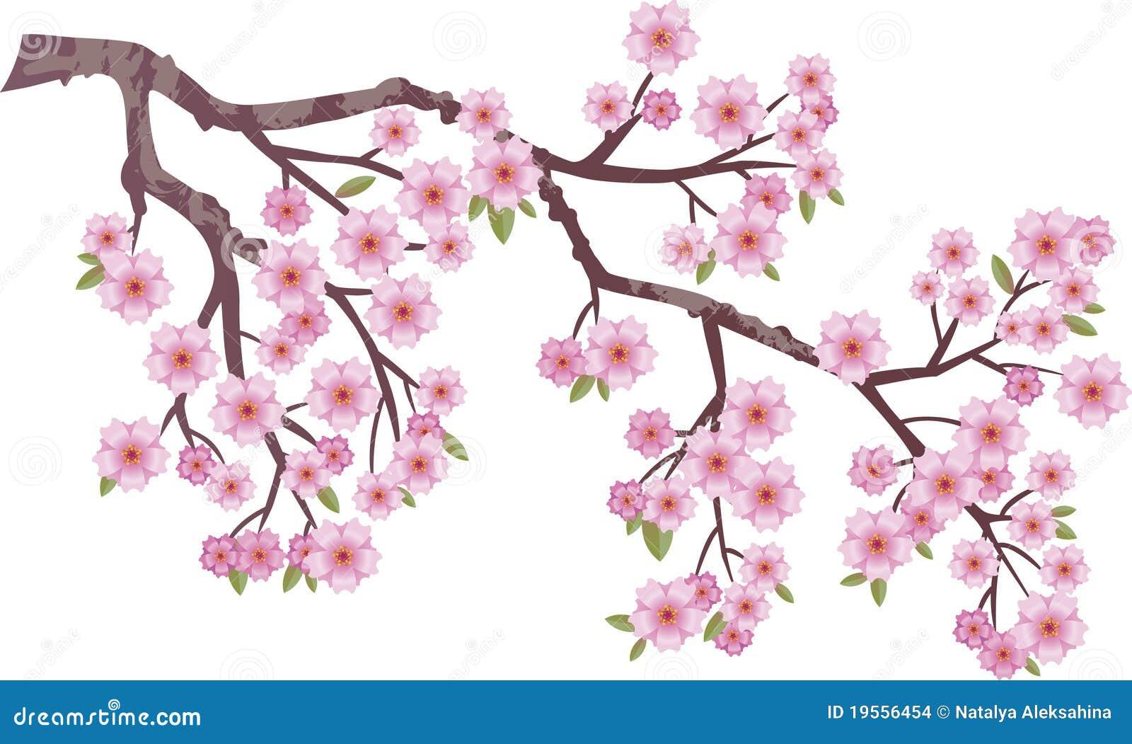 Orientaliskt Cherry