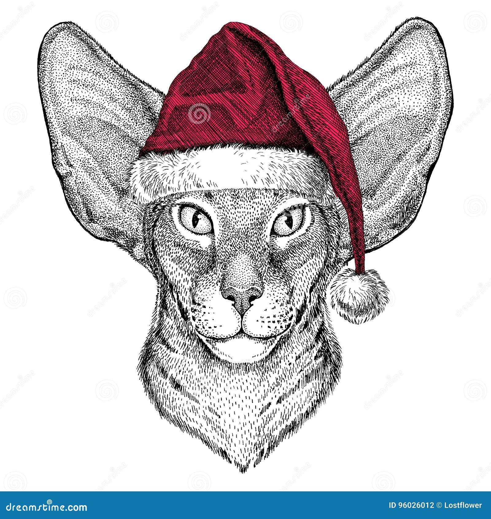 Orientalny kot z dużych ucho Bożenarodzeniowym ilustracyjnym dzikim zwierzęciem jest ubranym bożego narodzenia Santa Claus zimy k