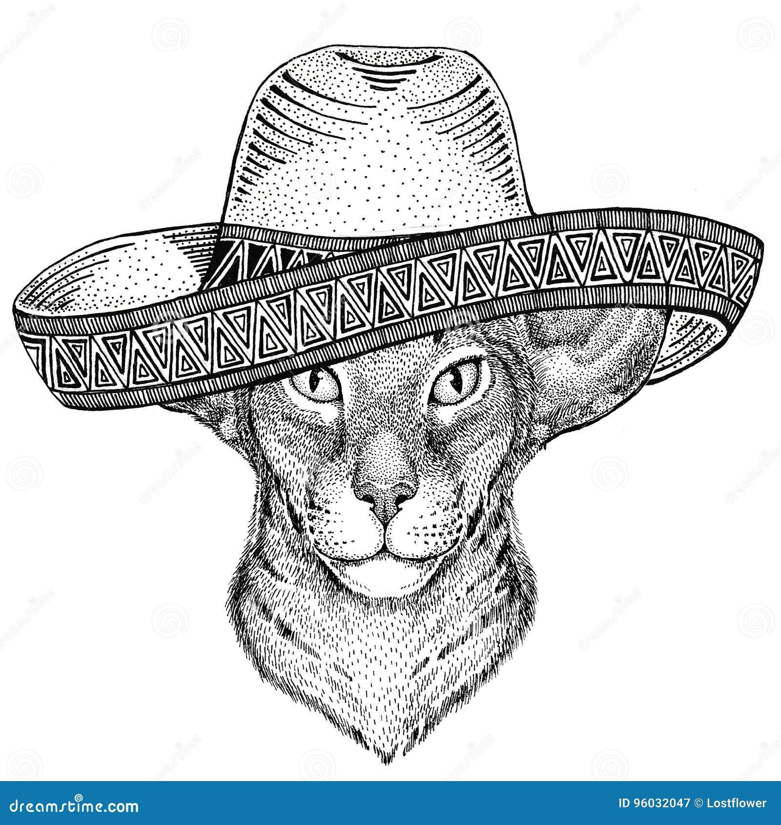Orientalny kot z dużym ucho dzikim zwierzęciem jest ubranym sombrero Meksyk fiesta meksykanina przyjęcia ilustracyjnego Dzikiego