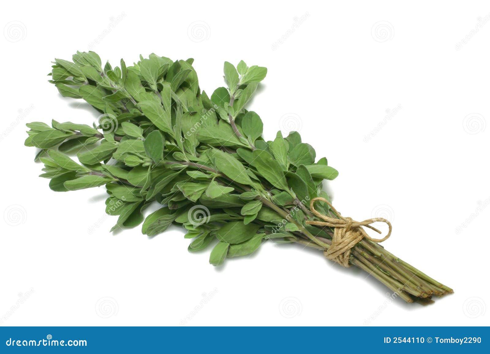 Origano di serie dell erba